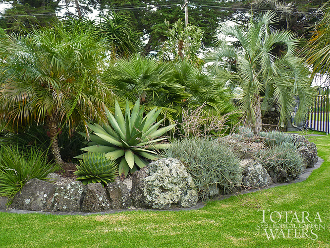 Garden Plants Nz Totara Waters Sub Tropical Garden Garden