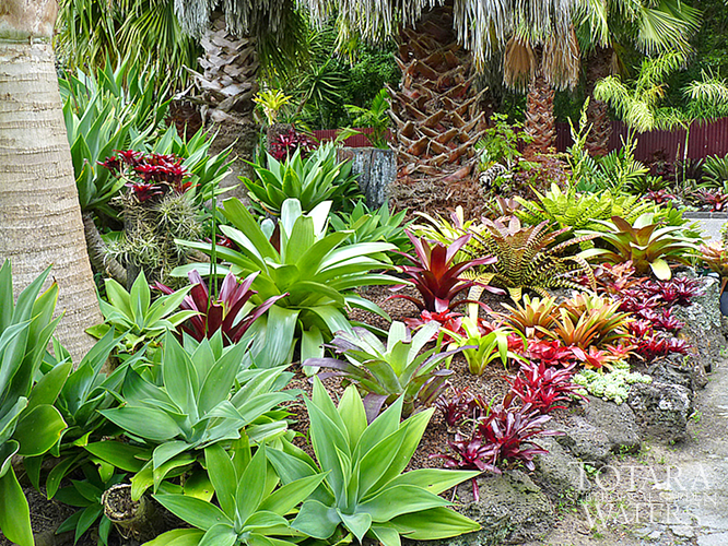 Totara waters sub tropical garden garden stay accommodation for New zealand garden designs ideas